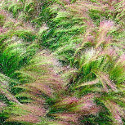 Fond paysage vert nature for Paysage vert
